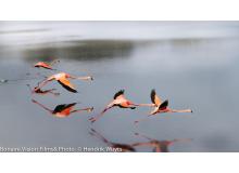 Flamingo_Collection_IMG_2752-9.jpg
