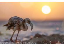 Flamingo__in_Sunset_IMG_3215.jpg